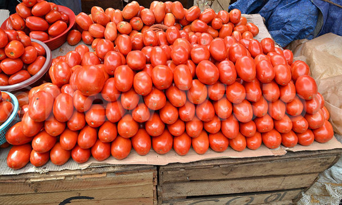 Price Of Tomatoes Drops In Enugu Major Markets