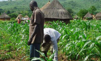 FG Distributes Free Inputs To Smallholder Farmers In Gombe - Minister
