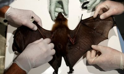 New Study Finds Bats In Thailand Carry Coronavirus Similar To COVID-19