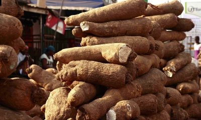 Citizens Of Enugu Look For Alternatives As Yam Price Surges