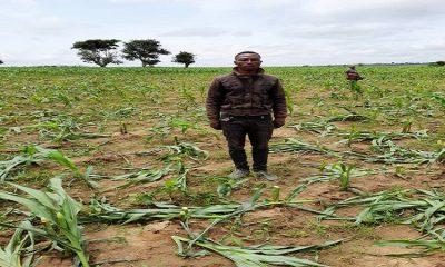 Vandalised Plateau Farms Can Cause Food Insecurity