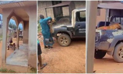 Police Arrest Dog For Biting Off AAU Student's Private Parts